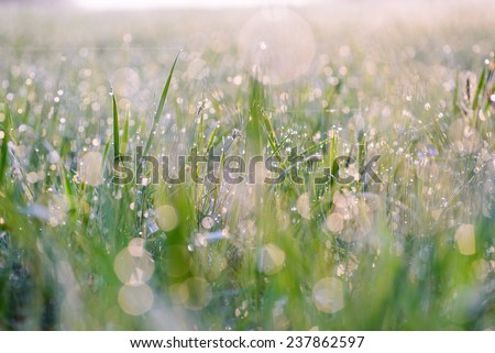 Droplets of dew on the grass glowing in the morning sun, and create a charming picture - stock photo