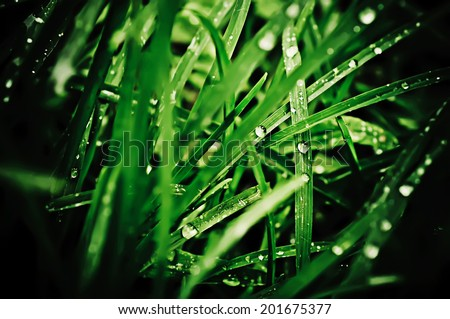 Droplets of dew on the green grass, shallow depth of field - stock photo