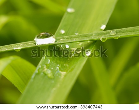 droplets on the green leafs,closeup ,shallow DOF, for backgrounds,environment,nature themes - stock photo