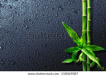 drops and bamboo on black - stock photo