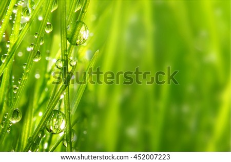 drops of dew on a green grass - stock photo