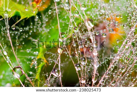 drops of morning dew, close-up - stock photo