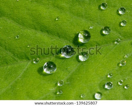 Drops of rain on a green leaf in the sunshine - stock photo