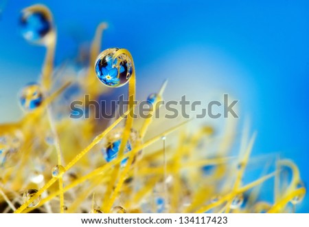 Drops. Reflected in the drops. - stock photo