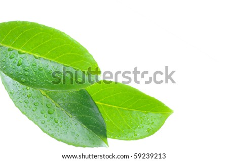 Drops water on the leaves - stock photo