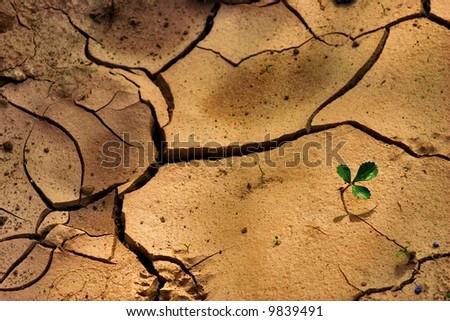 Drought Stricken Land - stock photo