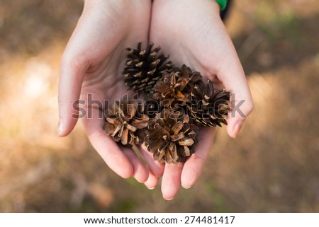 Drown pinecones in the hands - stock photo