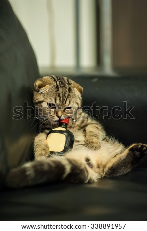 Drunk cat lying on a black sofa with alcohol bottle - stock photo