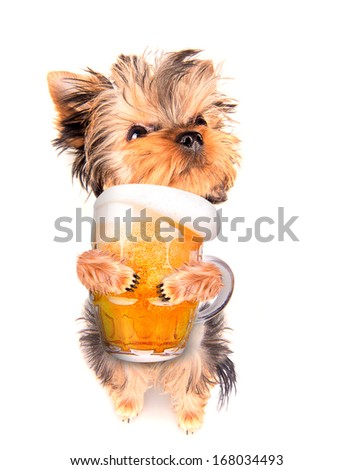drunk dog with fresh glass of beer - stock photo