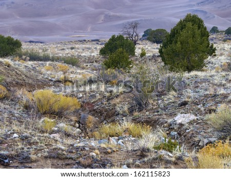 Dry arroyo canyon by the dunes in Great Sand Dunes National Park in Colorado. - stock photo