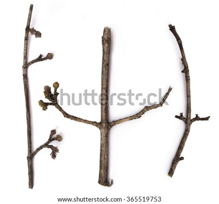 dry branches isolated on the white background - stock photo