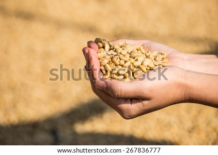 dry coffee beans in farmer hand at plantation - stock photo