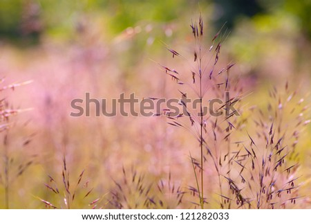 Dry colorful summer grass close-up - stock photo
