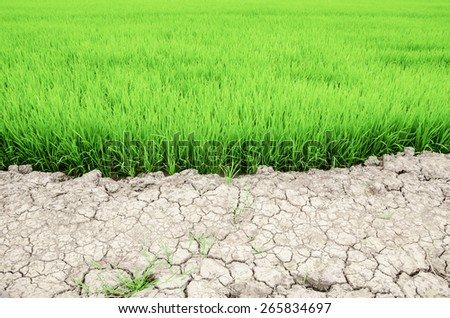 Dry crack earth at rice field in Thailand. - stock photo