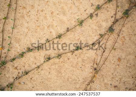 Dry Cracked soil ground - stock photo
