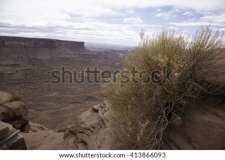 Dry Desert landscape with a tree, for background or texture, from Southern Utah - stock photo