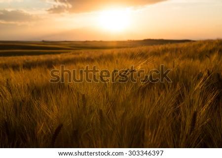 Dry Farm In Idaho - stock photo