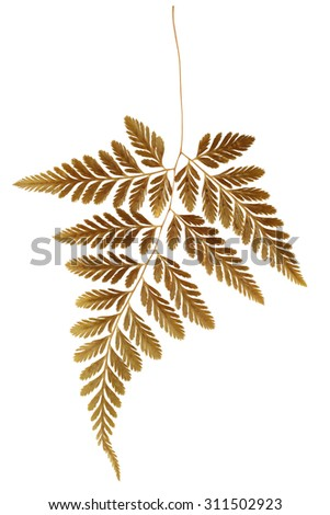Dry Fern Leaf on White Background - stock photo