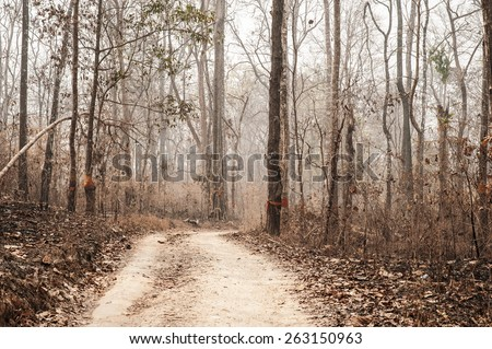 Dry forest and smog - stock photo