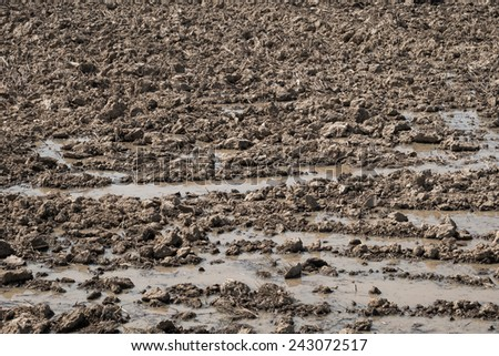 Dry grange in the season of drought - stock photo