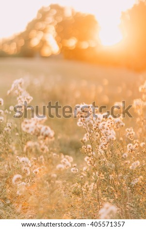 Dry grass flower with sun light, close up. Beautiful summer day in the field - stock photo