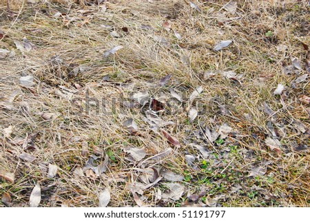 Dry grass in spring - stock photo