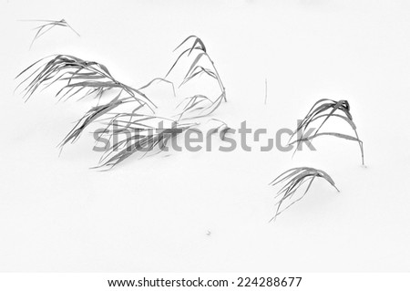 dry grass in the snow - stock photo