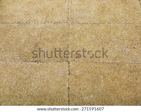 Dry grass land - stock photo