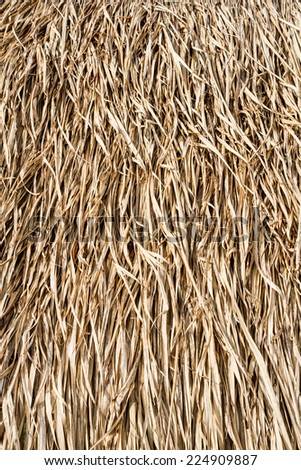 Dry Grasses Roof Close Up Background Stock Photo
