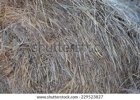 dry grey hay for horses - stock photo