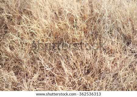 Dry hay closeup image as natural background - stock photo