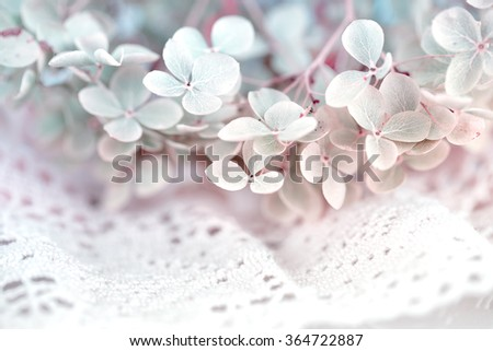 Dry hortensia flower on decorative white lace - stock photo