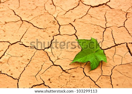 Dry land. Green leaf on cracked ground - stock photo