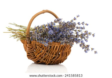 dry lavender flower in a basket, isolated on white background - stock photo
