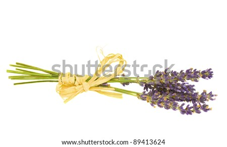 dry lavender  flower isolated on white background - stock photo