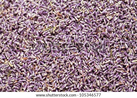 dry lavenders background - stock photo