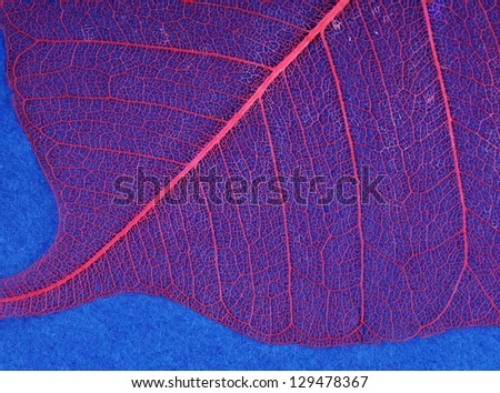 Dry leaf detail texture on blue background - stock photo
