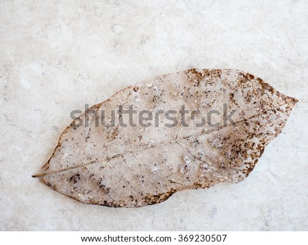 Dry leaf detail texture, select focus - stock photo