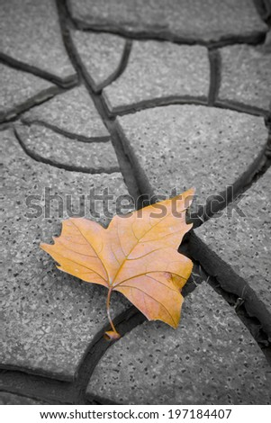 Dry leaf on dry ground. Picture useful to express the concepts of: life, death, melancholy, sadness, pessimism, hope, and so on ... - stock photo