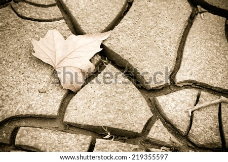 Dry leaf on the ground - stock photo