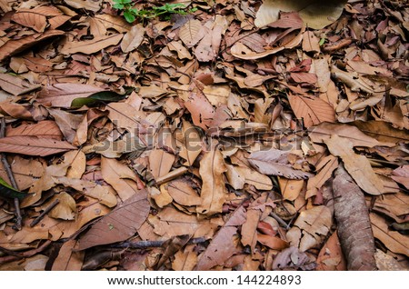 Dry leaf on the ground , Nature background and texture - stock photo