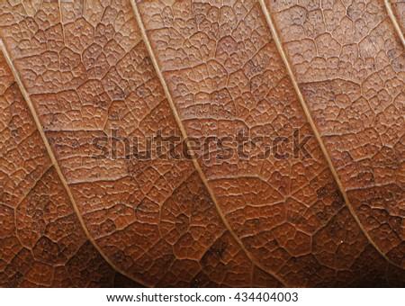 dry leaf texture macro - stock photo