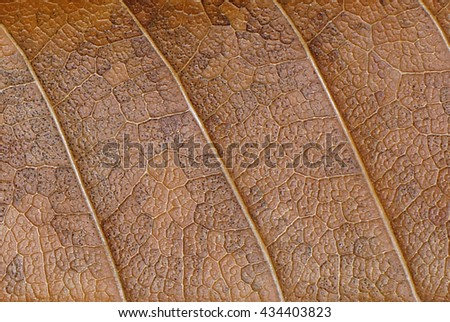 dry leaf texture wallpaper - stock photo