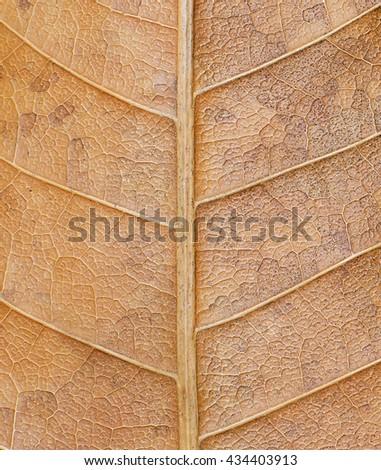 dry leaf wallpaper - stock photo