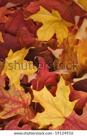 Dry leaves autumn background - stock photo