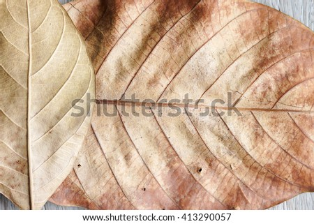 Dry leaves on old wood background - stock photo