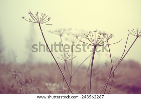 dry meadow plants  - stock photo
