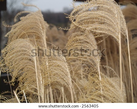 dry plants - stock photo