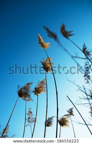 Dry prairie grass - stock photo