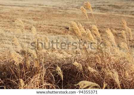 Dry prairie grass - stock photo